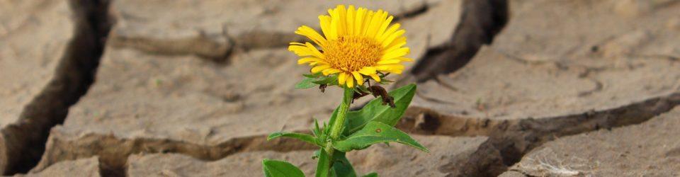 Blume Leben Riss Wüste Dürre Überleben Einsamkeit